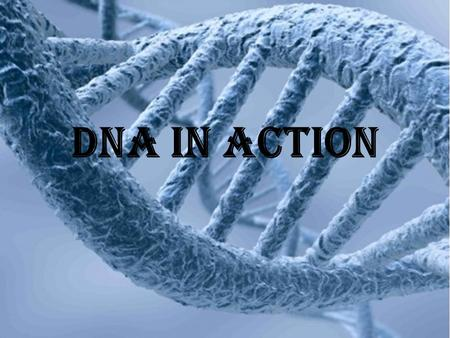 DNA in aCTION. DNA Basics DNA is the most basic building block of life DNA makes proteins for the body DNA passes genes from one generation to the next.
