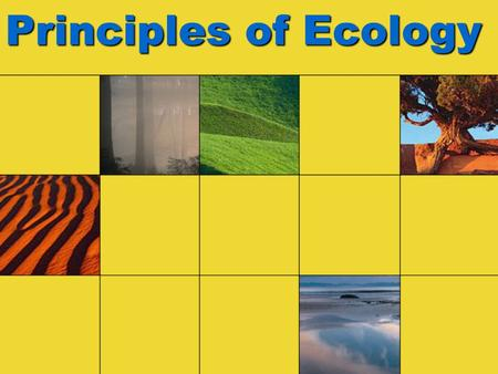 Principles of Ecology. Types of Organisms: REVIEW! Autotrophs (Producers) –Photoautotrophs –Chemoautotrophs Heterotrophs (Consumers) –Herbivores –Carnivores.