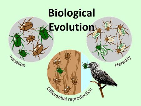 Biological Evolution. What is Evolution Evolution is descent with modification Microevolution = changes in gene (allele) frequency in a population from.