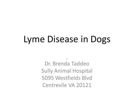 Lyme Disease in Dogs By Dr. Brenda Taddeo Sully Animal Hospital 5095 Westfields Blvd Centrevile VA 20121.