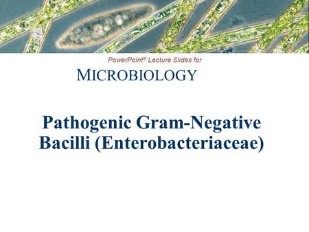 PowerPoint ® Lecture Slides for M ICROBIOLOGY Pathogenic Gram-Negative Bacilli (Enterobacteriaceae)