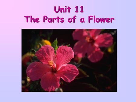 Unit 11 The Parts of a Flower. If you look carefully at a flower, you will see that it is made up of many different parts.If you look carefully at a flower,