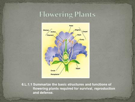 Flowering Plants 6.L.1.1 Summarize the basic structures and functions of flowering plants required for survival, reproduction and.