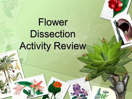 Flower Dissection Activity Review