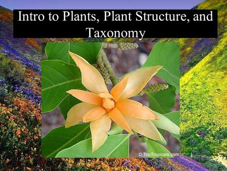 Intro to Plants, Plant Structure, and Taxonomy