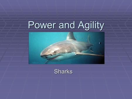 Power and Agility Sharks.