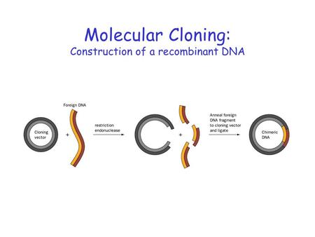 Molecular Cloning: Construction of a recombinant DNA