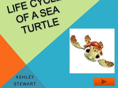 ASHLEY STEWART. Content Area: Science Grade: Third Summary: The purpose of this PowerPoint is to inform the students about the lifecycle of sea turtles.