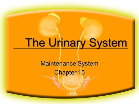 The Urinary System Maintenance System Chapter 15.
