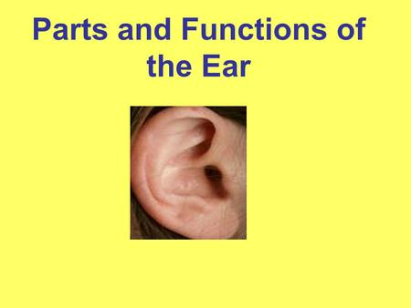 "Parts and Functions of the Ear. What is sound? Sound is the vibration of air molecules. Sound waves refer to the ""ripples"" created as the sound vibrations."