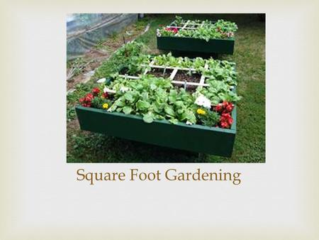 Square Foot Gardening.   It is a method of gardening where you plant your vegetables in a 1'x1' square  Advantages of Doing this:  Reduced Weeding.