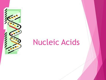 Nucleic Acids 1. WHAT ARE NUCLEIC ACIDS? Used for: Storing genetic information Assembly instructions for protein synthesis Energy molecule (ATP – adenosine.