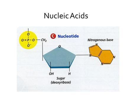 Nucleic Acids. Your Assignment Your Nucleic Acid Assignment 1. Define, compare and give examples of the two types of nucleic acids (structure, location.