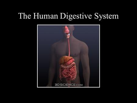 The Human Digestive System. Main Goal of the Digestive System The human body, unlike plants, cannot produce its own food, and must instead consume and.