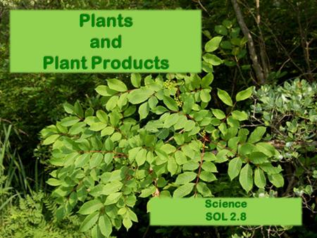 Plants and Plant Products Science SOL 2.8. Plants provide many useful products and materials, which benefit human beings as well as other living things.