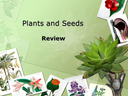 Plants and Seeds Review.
