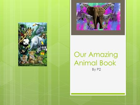 Our Amazing Animal Book