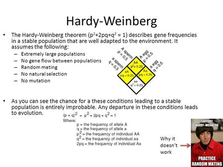Hardy-Weinberg The Hardy-Weinberg theorem (p2+2pq+q2 = 1) describes gene frequencies in a stable population that are well adapted to the environment. It.