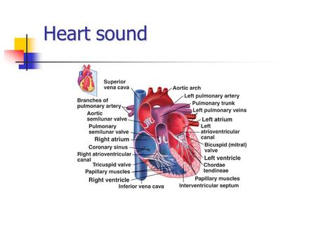 Heart sound. What we hear ? We have all heard the heart make the usual sounds. LUB----------DUB Lub is the first sound or S1 Dub is the second heart sound.