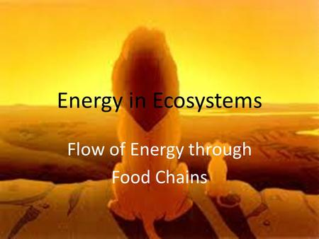 Flow of Energy through Food Chains