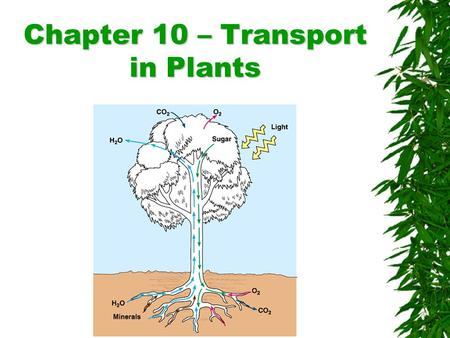 Chapter 10 – Transport in Plants. Transport in plants  Water and mineral nutrients must be absorbed by the roots and transported throughout the plant.
