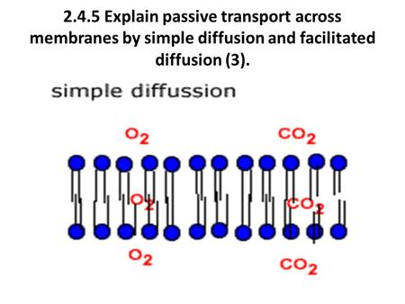 2.4.5 Explain passive transport across membranes by simple diffusion and facilitated diffusion (3).