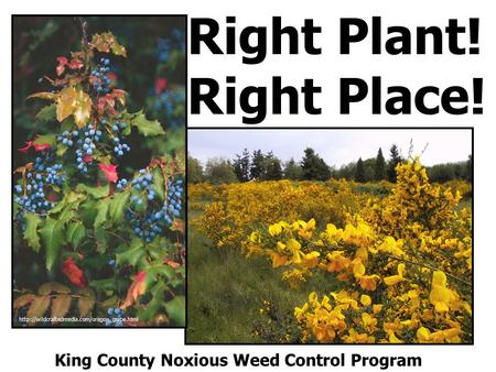 Right Plant! Right Place!  King County Noxious Weed Control Program.