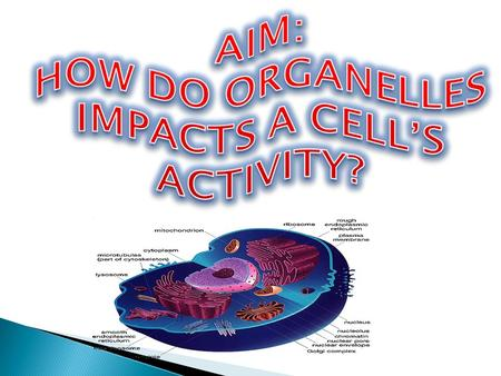 HOW DO ORGANELLES IMPACTS A CELL'S ACTIVITY?