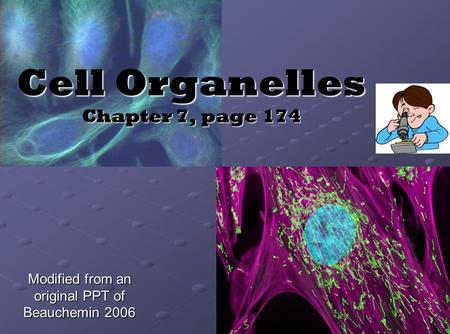 Cell Organelles Chapter 7, page 174