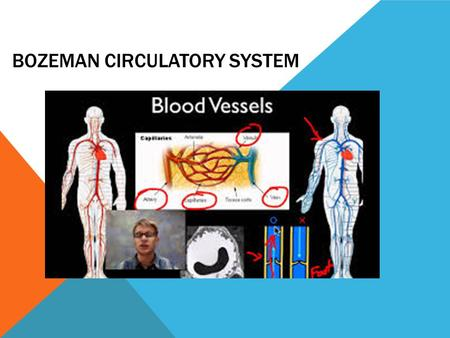 Bozeman Circulatory System