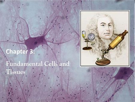 human anatomy and physiology global edition 10e marieb hoehn pdf