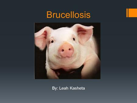 Brucellosis By: Leah Kasheta.