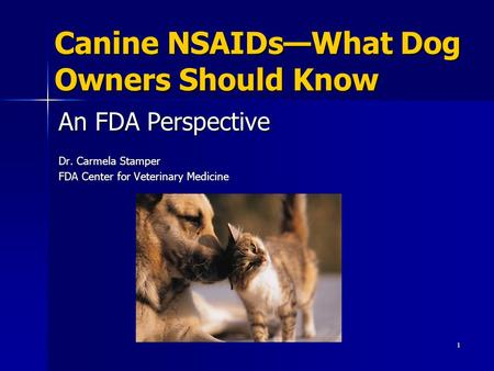 Canine NSAIDs—What Dog Owners Should Know