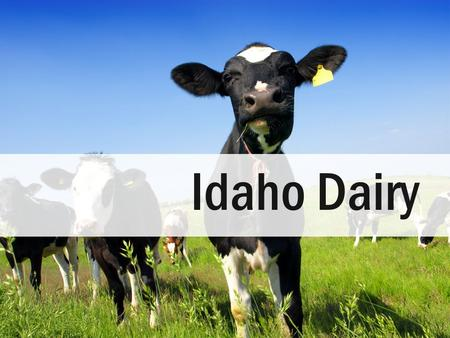 Idaho Dairy Today we are going to learn about Idaho daries.