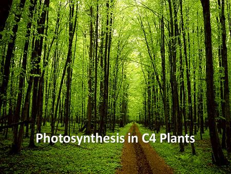 Photosynthesis in C4 Plants. Building Sugars What products came from the light-dependent reactions? – ATP and NADPH Light-independent reactions use ATP.