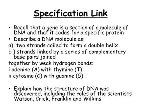 Specification Link Recall that a gene is a section of a molecule of DNA and that it codes for a specific protein Describe a DNA molecule as: a) two strands.