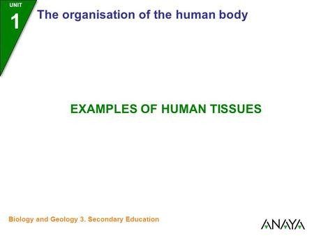UNIT 1 The organisation of the human body EXAMPLES OF HUMAN TISSUES Biology and Geology 3. Secondary Education.