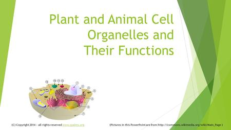 Plant and Animal Cell Organelles and Their Functions