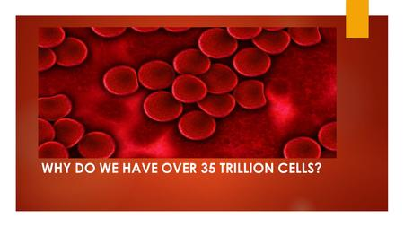 WHY DO WE HAVE OVER 35 TRILLION CELLS?. What is a cell?  Cell: Smallest unit of living matter that can carry out all processes required for life.
