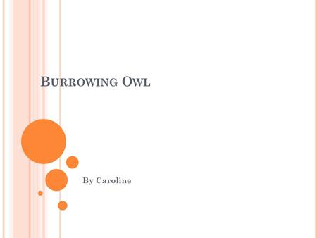 B URROWING O WL By Caroline P HYSICAL C HARACTERISTICS  The length of the burrowing owl is only 10 in.  The weight of the burrowing owl is only 6 oz.