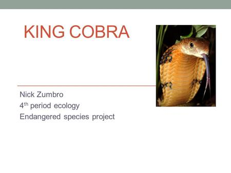 KING COBRA Nick Zumbro 4 th period ecology Endangered species project.