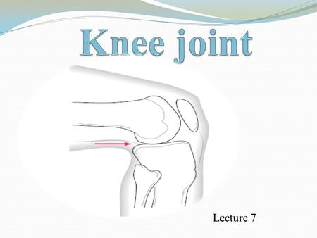 Lecture 7. The knee joint It is the largest joint in the body & one of the more complex joints in the body.  Because it is supported and maintained entirely.