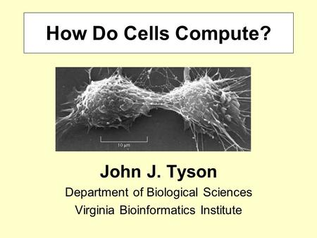 How Do Cells Compute? John J. Tyson Department of Biological Sciences Virginia Bioinformatics Institute.