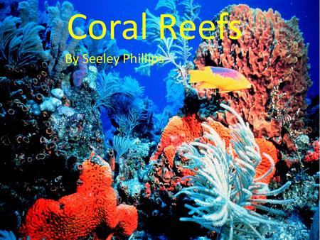 Coral Reefs By Seeley Phillips.