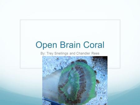 Open Brain Coral By: Trey Snellings and Chandler Rees.