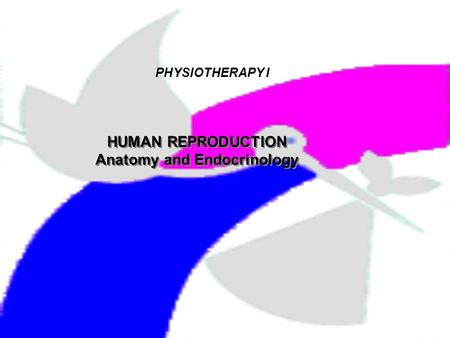 PHYSIOTHERAPY I HUMAN REPRODUCTION Anatomy and Endocrinology HUMAN REPRODUCTION Anatomy and Endocrinology.