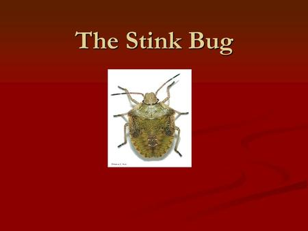 The Stink Bug. Description Description Adults are approximately 17 mm long (25 mm = one inch) and are shades of brown on both the upper and lower body.