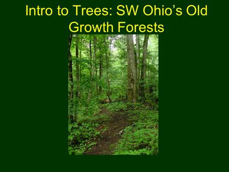 Intro to Trees: SW Ohio's Old Growth Forests. Outline Our Geologic History Eastern Deciduous Forests –Forest Layers –Forest Types –Old Growth Features.