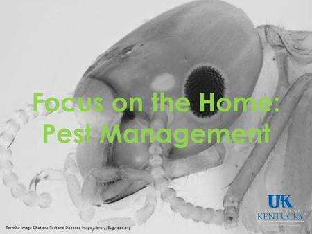 Focus on the Home: Pest Management