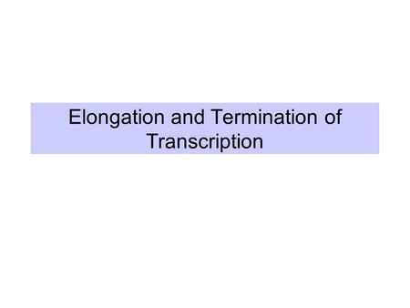 Elongation and Termination of Transcription. Elongation phase of transcription Requires the release of RNA polymerase from the initiation complex Highly.